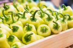 Peperone dolce verde Immagini Stock Libere da Diritti
