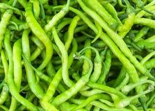 Peperone verde organico Fotografia Stock Libera da Diritti