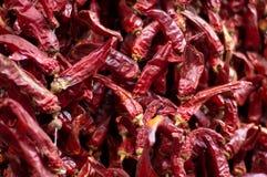 Peperoni caldi Immagini Stock Libere da Diritti