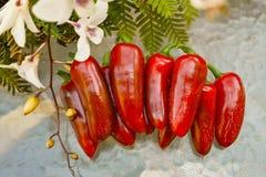 Peperoni caldi Immagini Stock