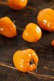 Peperoni caldi e piccanti organici del Habanero Immagini Stock
