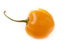 Peperoni caldi e piccanti organici del Habanero Immagine Stock Libera da Diritti