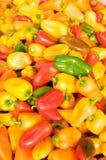 Peperoni caldi variopinti Fotografie Stock Libere da Diritti