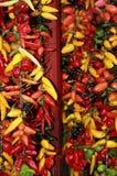 Peperoni di peperoncini rossi caldi Immagini Stock