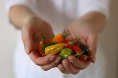 Peperoni di peperoncini rossi in mani fotografia stock libera da diritti