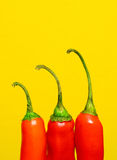 Peperoni di peperoncini rossi rossi Immagine Stock Libera da Diritti