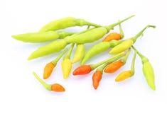 Peperoni di peperoncini rossi rossi e verdi Fotografia Stock