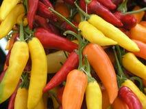 Peperoni di peperoncino rosso Fotografie Stock