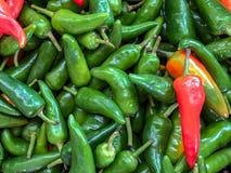Peperoni di peperoncino rosso rossi e verdi immagini stock libere da diritti