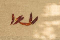 Peperoni di peperoncino rosso secchi Immagine Stock