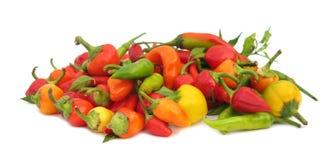 Peperoni di peperoncino rosso variopinti Fotografia Stock Libera da Diritti