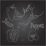 Peperoni dolci e caldi Insieme delle verdure disegnate a mano Illustrazione di vettore sulla lavagna Immagine Stock