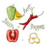 Peperoni dolci e caldi Insieme di colore delle verdure disegnate a mano Illustrazione di vettore con i prodotti di schizzo Fotografia Stock