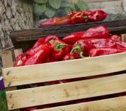 Peperoni dolci rossi che griling Immagini Stock