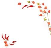 Peperoni e terra-ciliegia di peperoncino rosso Immagini Stock