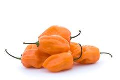 Peperoni freddi arancioni fotografia stock