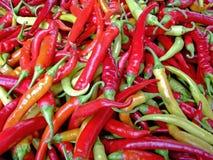 Peperoni freddi caldi Fotografia Stock