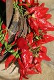 Peperoni freddi rossi Fotografia Stock