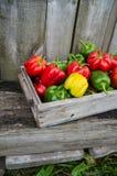 Peperoni freschi Fotografia Stock