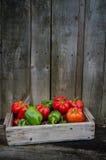 Peperoni freschi Immagini Stock Libere da Diritti