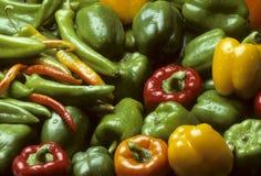 Peperoni multicolori Mixed di peperoncino rosso e della Bell Immagine Stock Libera da Diritti
