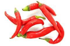 Peperoni roventi del jalapeno sopra bianco Immagini Stock