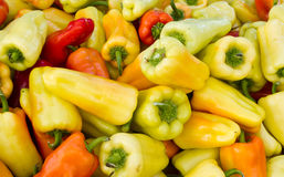 Peperoni variopinti su visualizzazione Fotografia Stock
