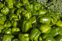 Peperoni verdi Immagine Stock