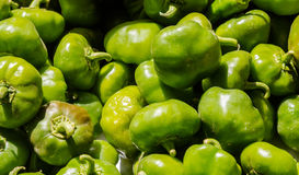 Peperoni verdi freschi del capsico Fotografia Stock Libera da Diritti