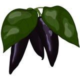 Peperoni viola freschi Fotografia Stock