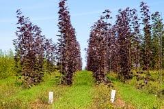 pepinier drzewa zdjęcie royalty free