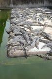 Pepiniera krokodyla staw Zdjęcia Royalty Free
