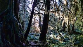 Pepiniery drzewo Obraz Royalty Free