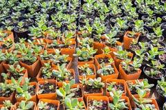 Pepiniery roślina w pomarańczowym plastikowym garnku w domu ogródzie Obraz Royalty Free