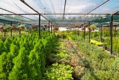 pepiniery roślina Obrazy Royalty Free