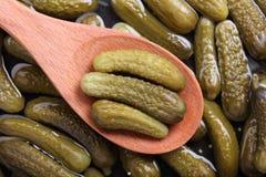 Pepinillos conservados en vinagre en una cuchara de madera Imagen de archivo libre de regalías