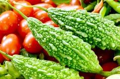 Pepino amargo. imagem de stock