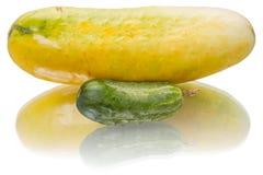 Pepino amarillo y verde Fotos de archivo
