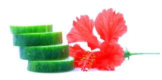 Pepino de refrescamento foto de stock