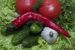 Pepino do tomate Imagem de Stock