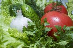Pepino do tomate Fotografia de Stock Royalty Free