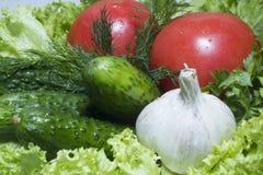 Pepino do tomate Imagens de Stock Royalty Free