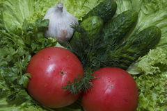 Pepino do tomate Imagens de Stock