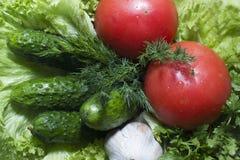 Pepino do tomate Fotografia de Stock