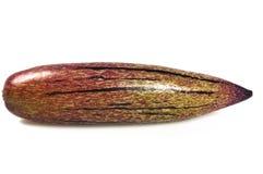 Pepino Melone Lizenzfreie Stockfotos