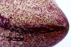 Pepino (Nachtschade Muricatum) Stock Foto