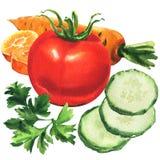 Pepino tajado verde fresco, tomate rojo entero, hoja del perejil, zanahoria amarilla, colección de verduras maduras de la varieda ilustración del vector