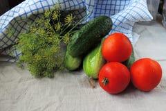 Pepino, tomate y eneldo imágenes de archivo libres de regalías