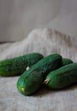 Pepino verde Fotos de archivo libres de regalías