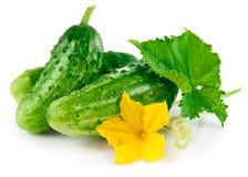 Pepino verde fresco con la hoja y la flor Imagen de archivo libre de regalías